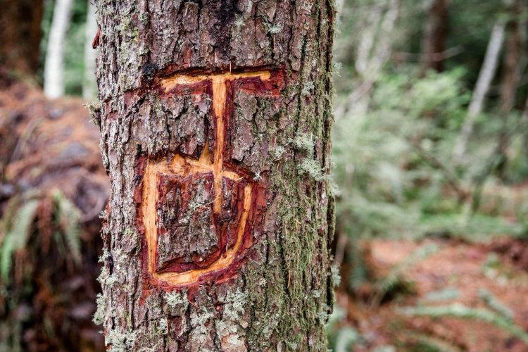 Leave no Trace - não marque árvores ou rochas