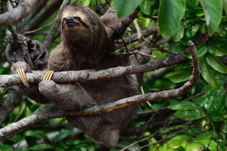 Respeite a Vida Selvagem - Leave no Trace