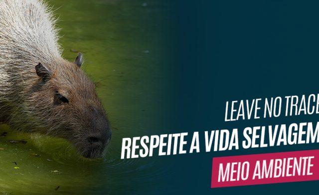 Leave no Trace – Respeite a vida selvagem
