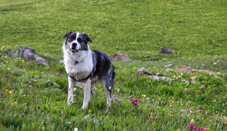 Cuidado com seu animal de estimação no ambientes naturais